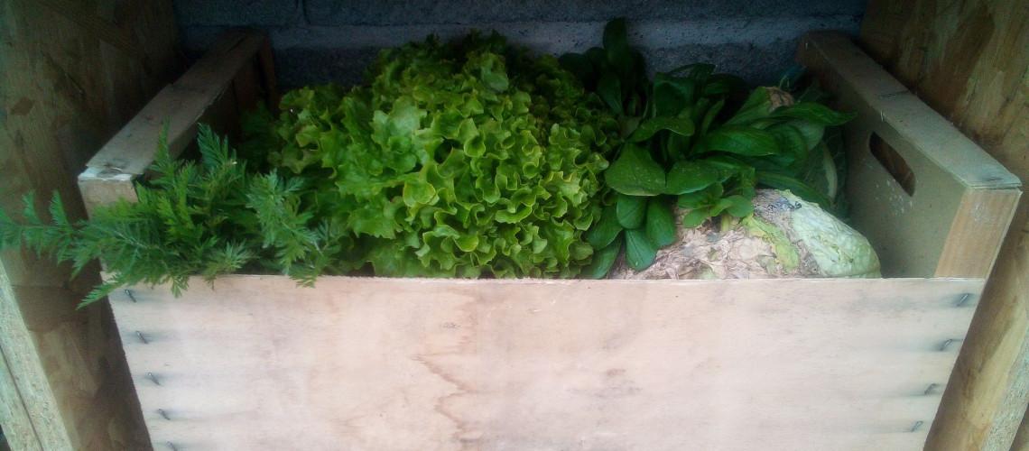 Panier de légumes dans son casier