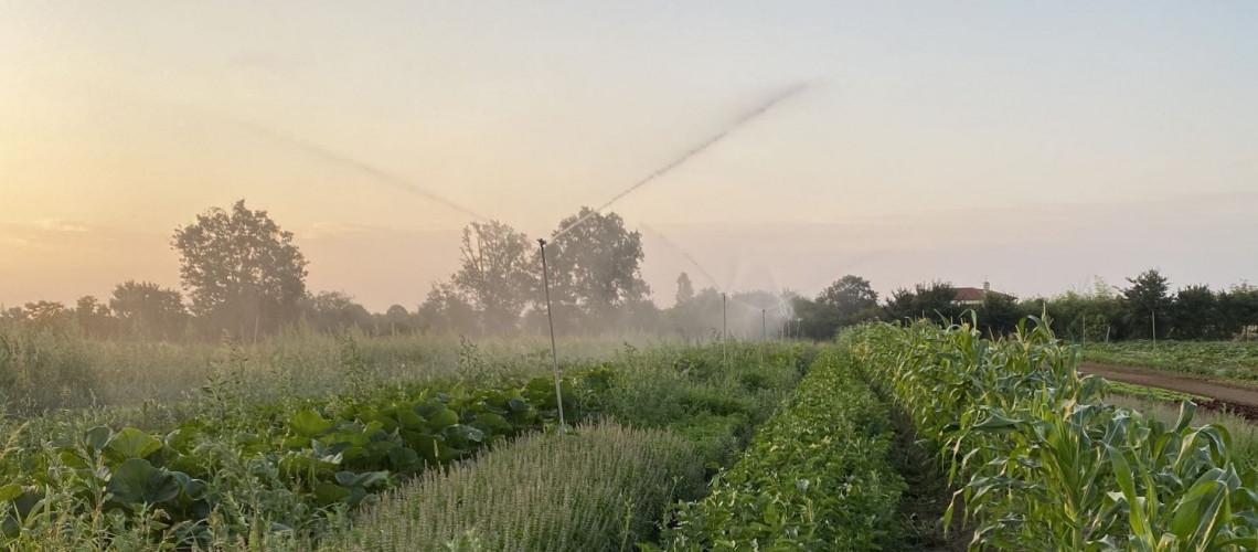 La ferme au petit matin